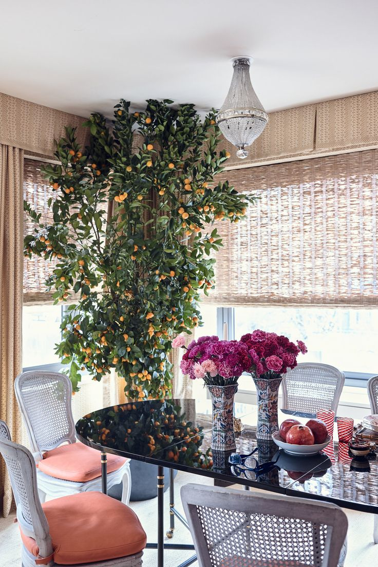 Full bloom citrus tree in the dining