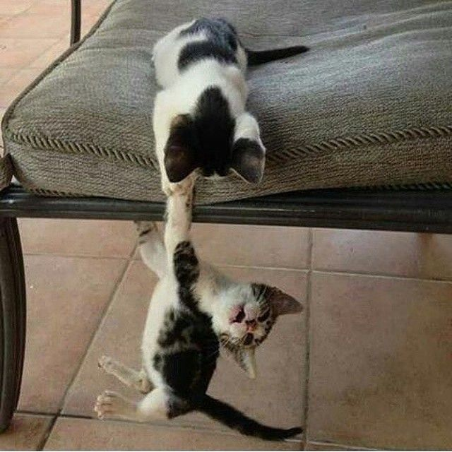#Two #Cute #black and #white #cats #playing . . .  #catsofinstagram #cutecats #cutekittens #kittens #kitty