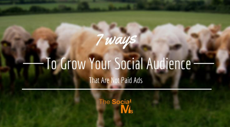 7 #WaysToGrow Your #SocialAudience That Are Not #PaidAds https://blog.thesocialms.com/7-ways-to-grow-your-social-audience-that-are-not-paid-ads/?utm_campaign=crowdfire&utm_content=crowdfire&utm_medium=social&utm_source=pinterest #free