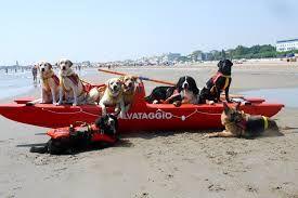 Bagnini a quattro zampe: i cani della Sics pronti al salvataggio in acqua