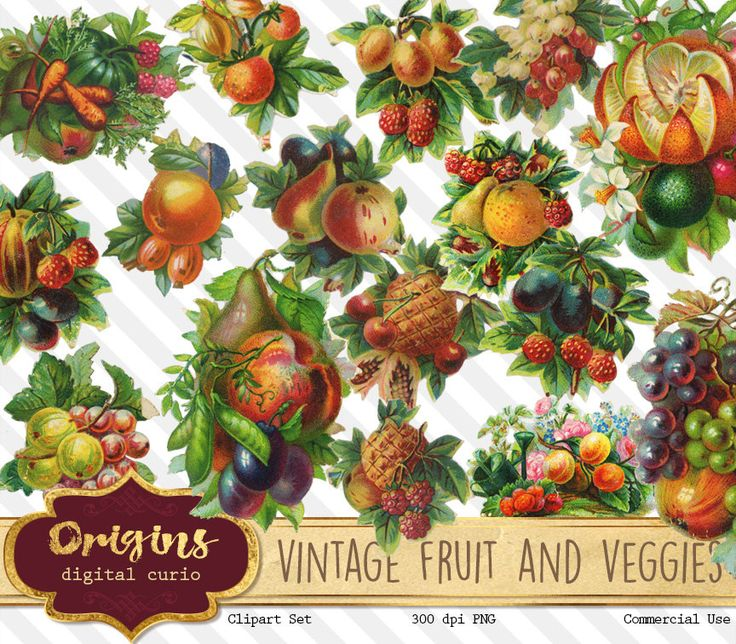 Vintage Fruit and Vegetable Clip Art This is a clipart pack containing 16 images of vintage fruit and vegetable illustrations from greeting cards. Perfect for invitations, baby showers, scrapbooking projects, or any of your creative projects. Each image is packed as a high