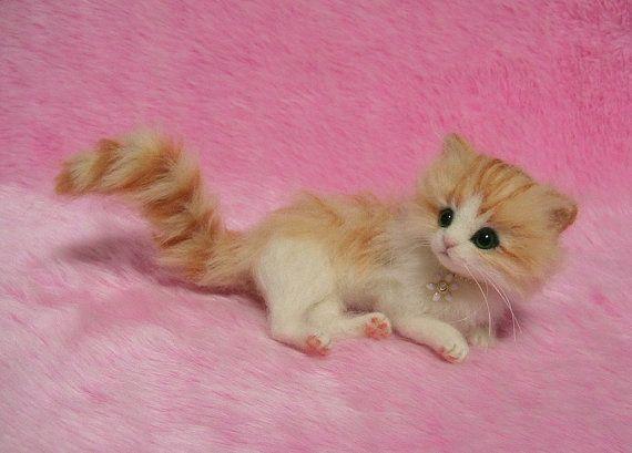 cute fluffy siamese kittens - photo #21