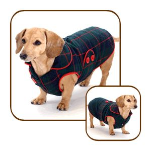 11 best Dachshund Autumn and Winter Coats! images on