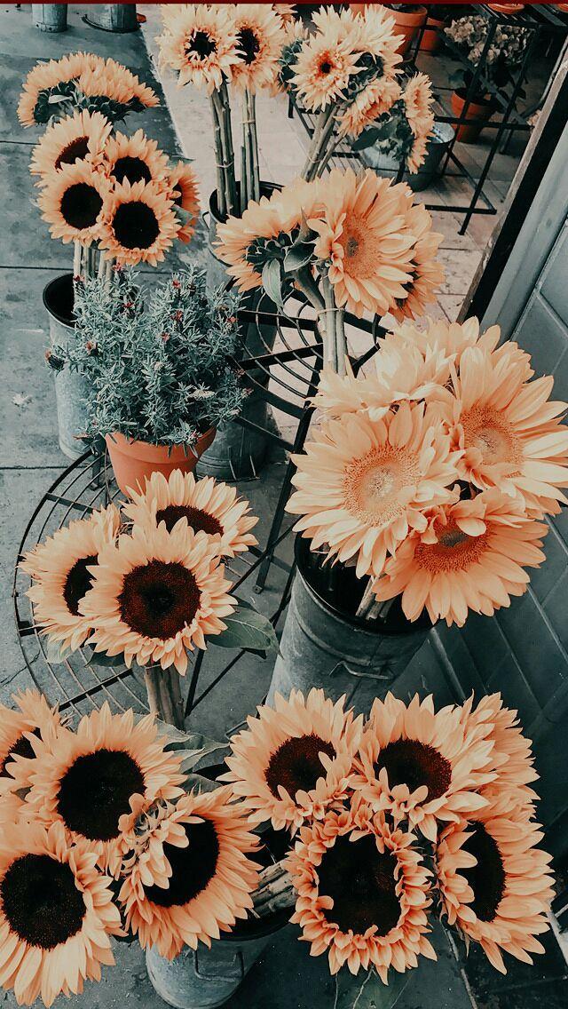 Imagenes With Psd Con Imagenes Papel Pintado Flores