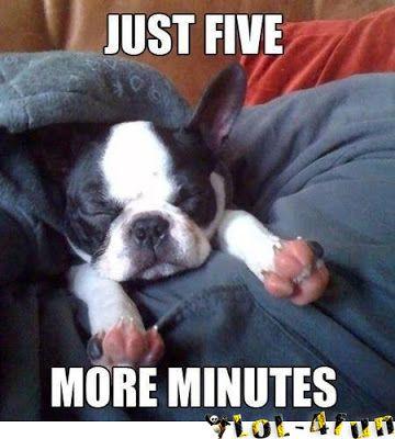 Please 5 more minutes. Funny dogs - http://lol-4fun.blogspot.com/