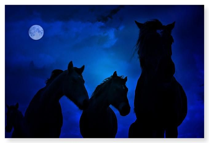 horses in the moonlightBeautiful Horses, Horses Beautiful, Horses Cavalo, Beautiful Animal, Hors Crazy, Blue Moon, Midnight Hors, Blue Night, Moon Pictures