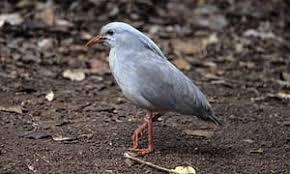 Image result for just weird rainforest birds