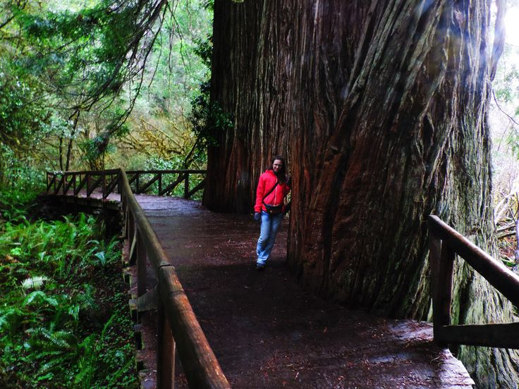 Redwood National and State Parks, CA, USA | Best Summer Hikes In California