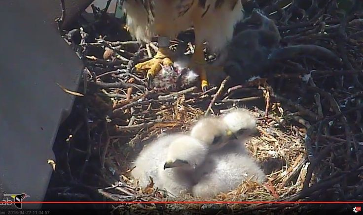 """Valerie Rogers: """"All 3 G's together in @CornellHawks land. Growing way too fast!"""