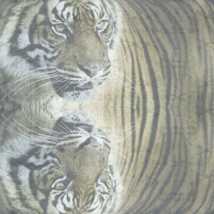 BIG CAT CASHMERE SCARF