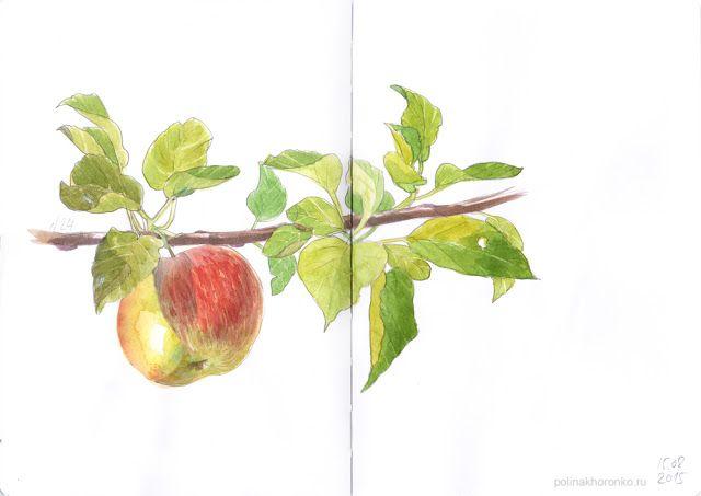 #sketchbook by Polina Khoronko: Скетчбук 2015 #watercolor #apple #foodillustration