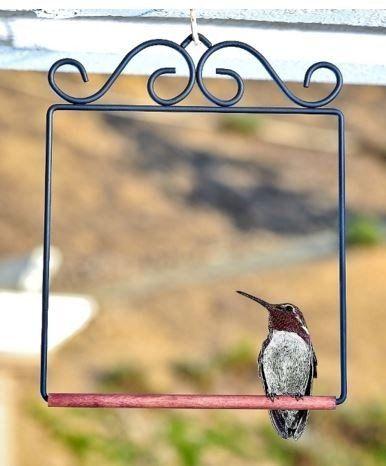 Black Hummingbird Swing