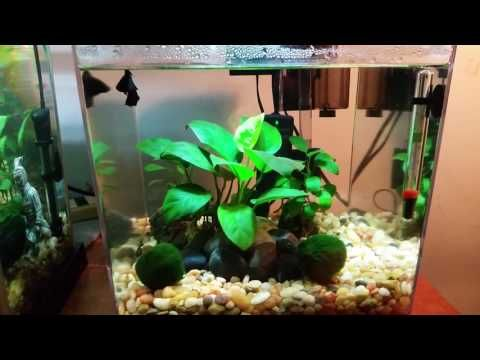 Best 25 3 gallon fish tank ideas on pinterest 1 gallon for Self cleaning fish tank walmart