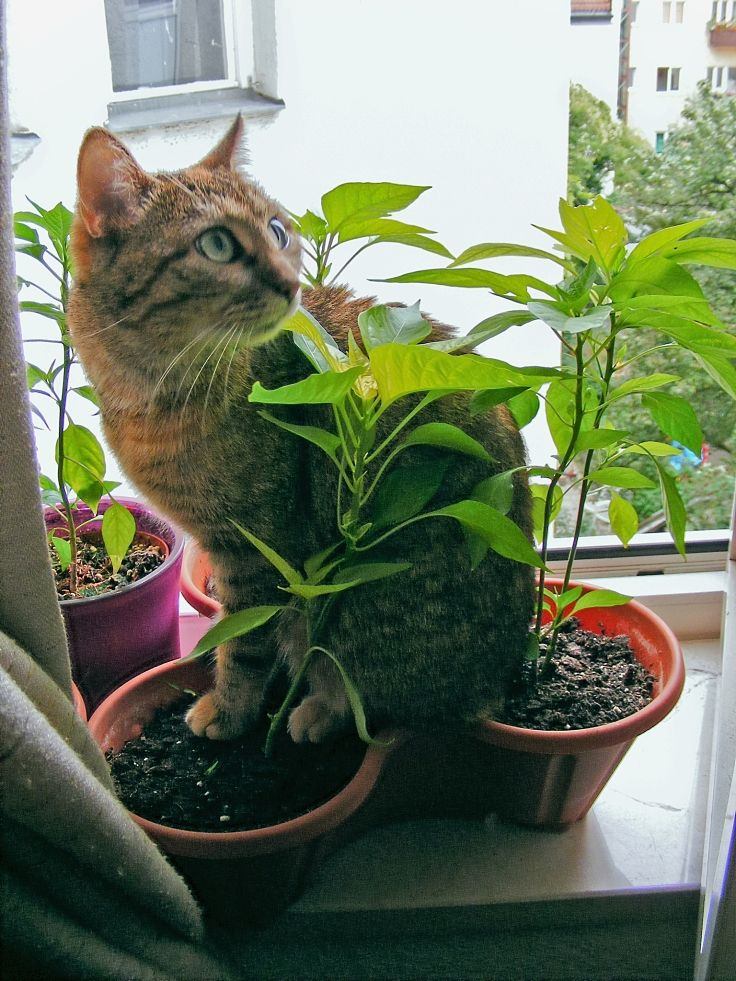 Many cats tend to hide in unusual places when they are in pain