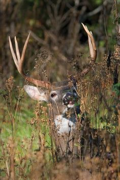 Early season deer hunting is one of the best times to be in the woods. These four pre-rut strategies will keep you closer to the big bucks.