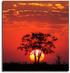 African Safari - yeah i could fall asleep to this view.