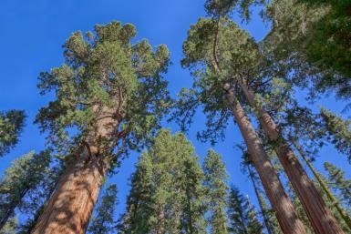 Why You Should See Sequoia National Park Instead of Yosemite: Giant Redwoods in Sequoia National Park