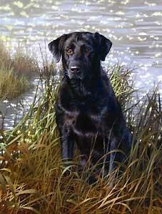 The All American - Bonnie Marris - World-Wide-Art.com - $165.00