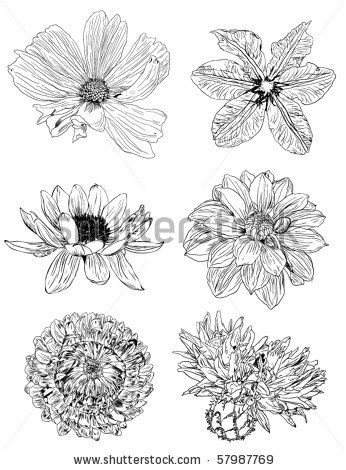 stock vector : collection of flower sketches