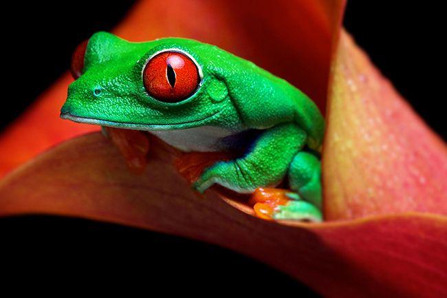 Mark Bridger wildlife photography / fotografia dzikiej przyrody