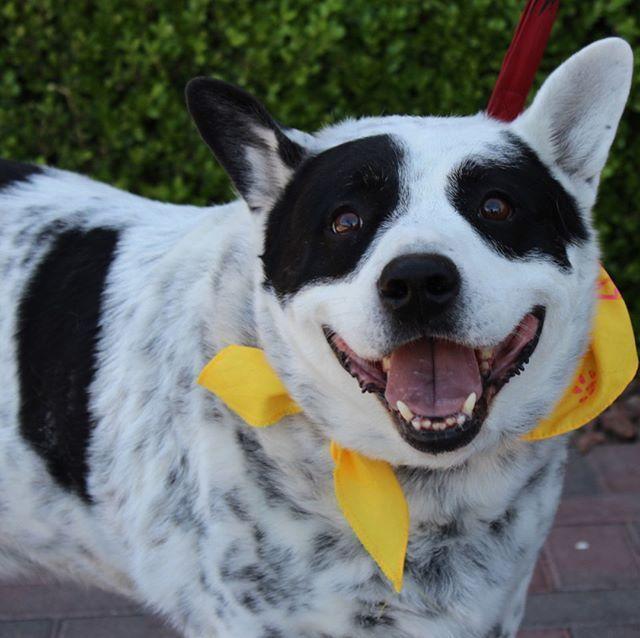 Get To Know Animal Network Little Dogs Animals Senior Dog