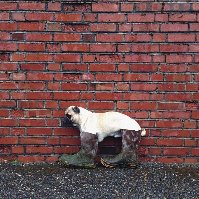Love Dog Blog