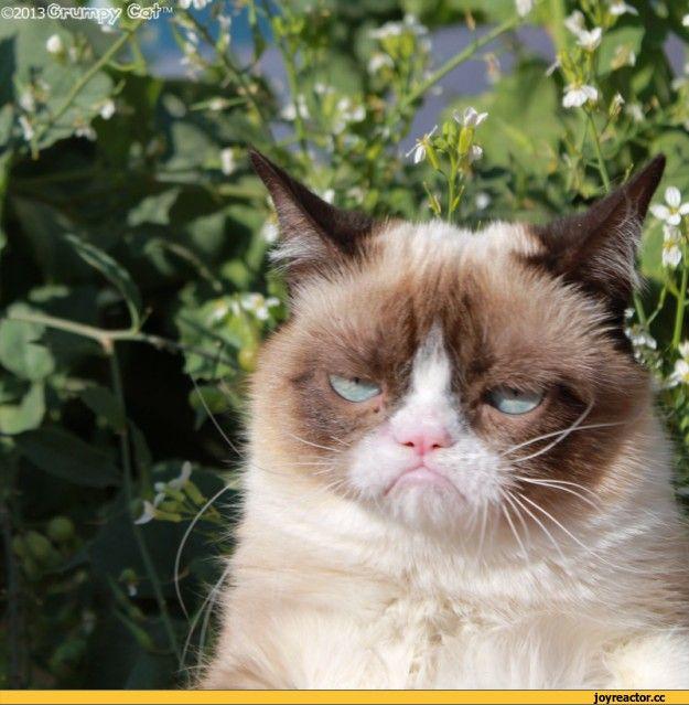 ;®нмга%? (âs#v e )A*A I км %- é\v fs *! « > * sV ' ш V. * t,Grumpy Cat,котэ,прикольные картинки с кошками,nope,no face,мемы,рожи, персонажи из комиксов,весна,радость,песочница