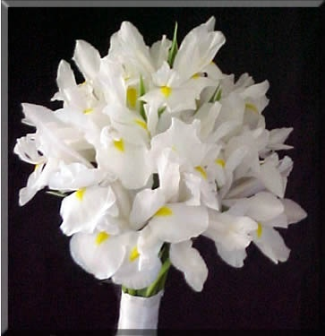white iris bouquet. not the best example, but white iris's are beautiful