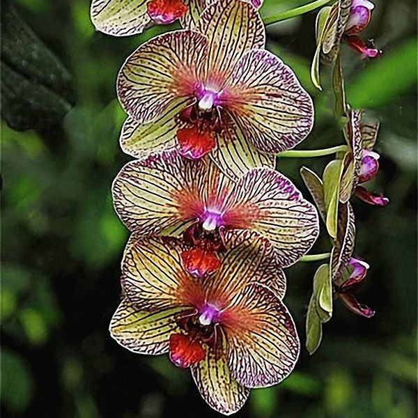 Pin By Laura Schardein On Flowers Beautiful Orchids Orchid Seeds Orchid Plants