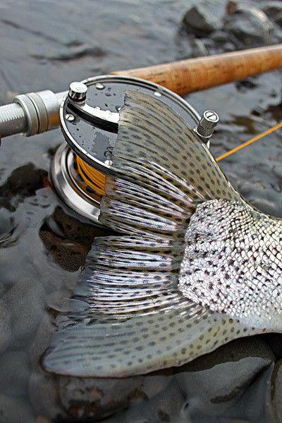 Salmon tail.