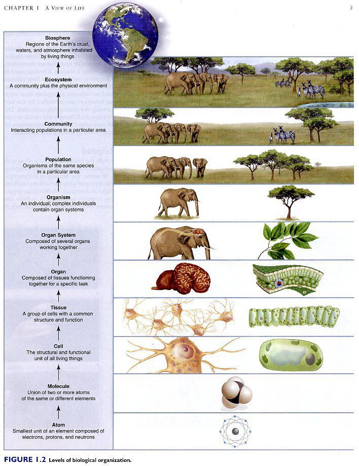 27 best images about Ecological Organization on Pinterest | Africa ...