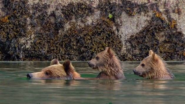 How Did They Shoot That? - Disneynature's Bears BTS | Bears ...