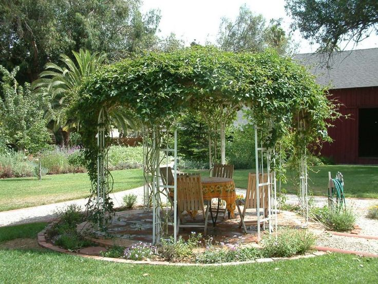 Trumpet Vines On A Gazebo Flower Beds Pinterest