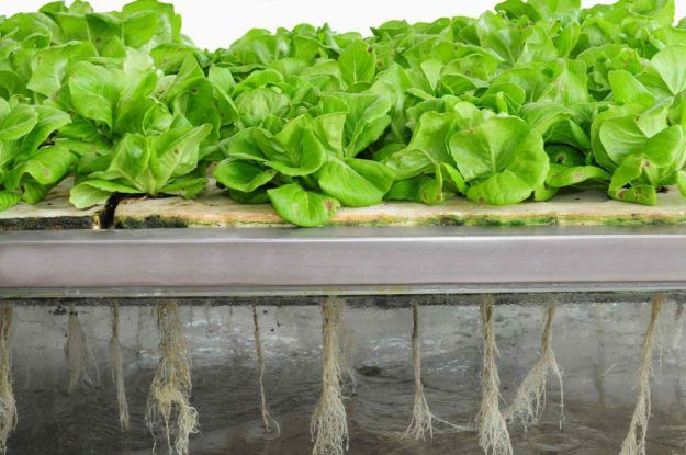 Vertical Farming For Compact Spaces | Types of Farming | Try Many Types Of Farming For You And Your Homestead