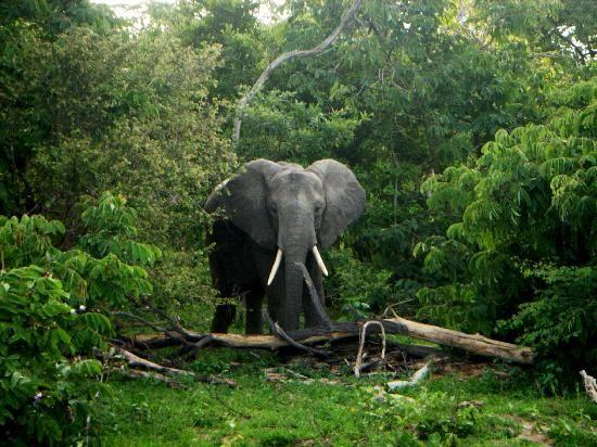 Selous Game Reserve, Tanzania.