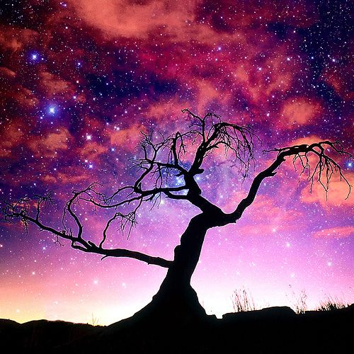 Stunning. The Milky Way Tree.