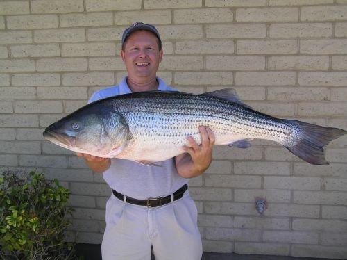 1000 images about arizona wildlife fishing on pinterest for Bass fishing az