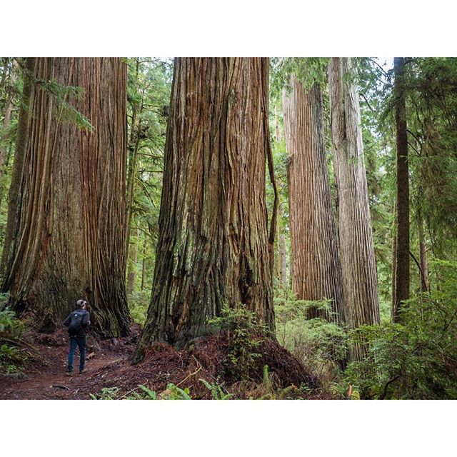 Caliparks : Jedediah Smith Redwoods State Park