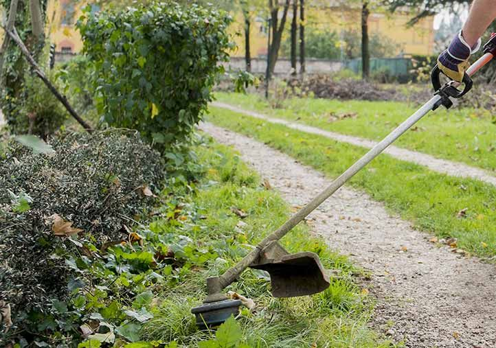 Are You Looking For The Professional Yard Cleanup Service Provider