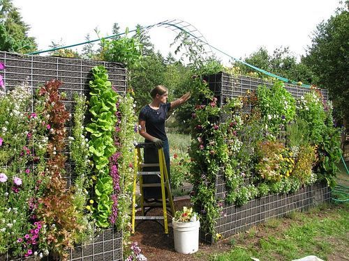 Vertical Gardening: The Key to a Lack of Floor Area