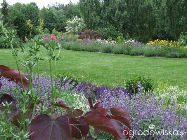 Kolorowy ogród na piasku - strona 509 - Forum ogrodnicze - Ogrodowisko