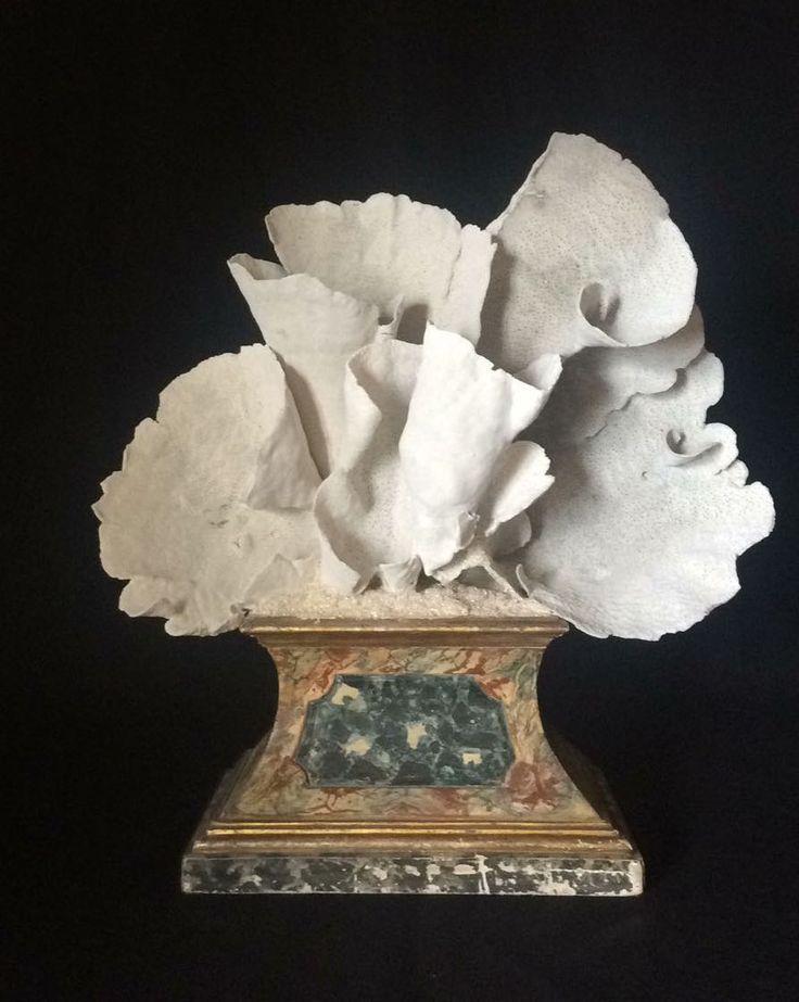 White wonderful coral mounted on antique base.  Corallo bianco, montato su una antica base dorata e marmorizzata.  cm  58 X 22 X 63 h