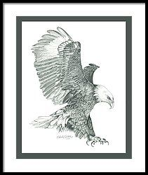 Bald Eagle In A Dive Framed Print by Robert Wilson