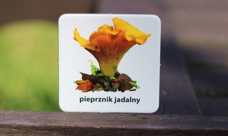 """Memo """"Grzyby polskie"""" <3 REWELACJA"""