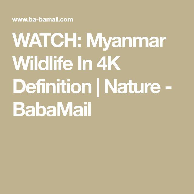 WATCH: Myanmar Wildlife In 4K Definition | Nature - BabaMail
