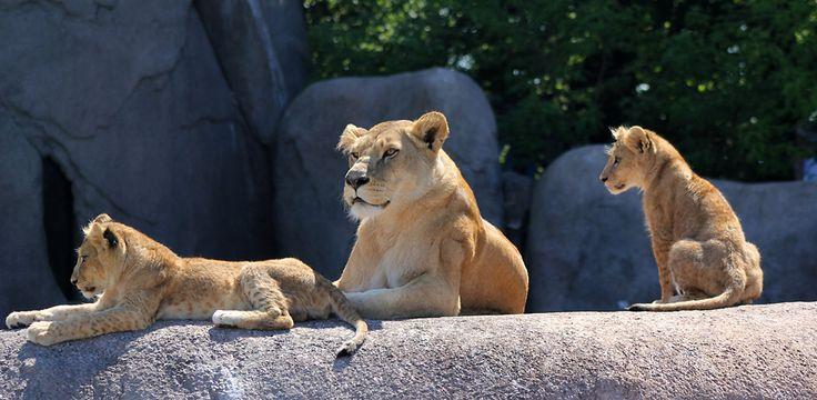 Ebeltoft Safari - en fin dag med familien blant fascinerende dyr fra hele verden