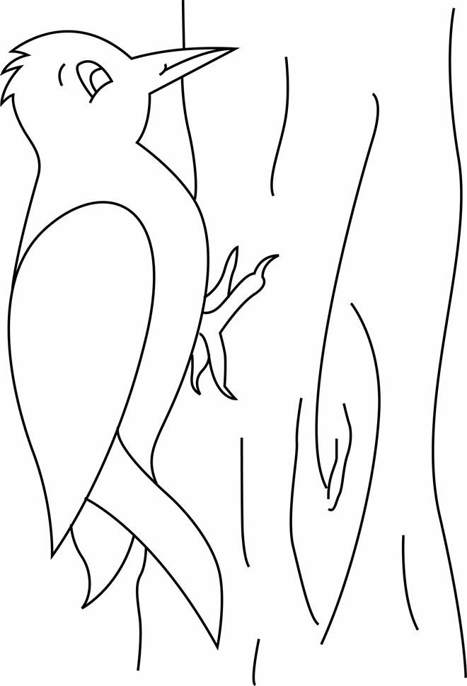 free animals woodpecker printable coloring pages for preschool