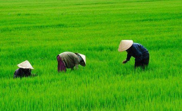 Mahyudin: Selama Kartel Ada Petani Tak Bisa Bangkit : Ketua Umum Himpunan Kerukunan Tani Indonesia (HKPI) Mahyudin menyatakan petani di Indonesia susah maju. Sebab itu petani Indonesia harus melawan kartel.