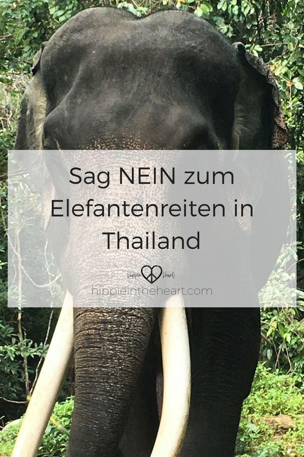 Sag NEIN zum Elefantenreiten in Thailand. Der Elefant gehört zu Thailand, wie die wunderschönen Strände und die atemberaubende Natur. Aber er ist nicht für die Bespaßung von Touristen da. Erfahre warum du niemals auf einem Elefanten reiten solltest. #thailand #urlaub #reisen #elefanten #elefantenreiten #tierschutz #thailandbackpacking #backpacking #thailandreise