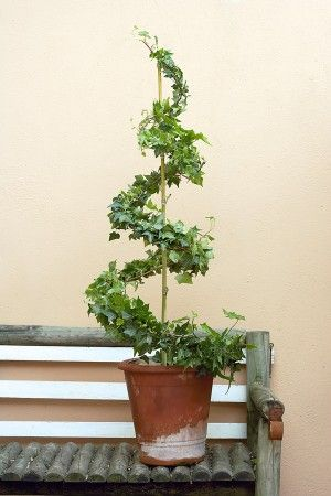Make your own spiral topiary frame